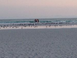 Siesta Key beach, #1 beach in USA