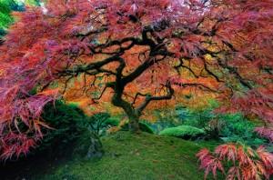 Beautiful-Tree-Photography-10
