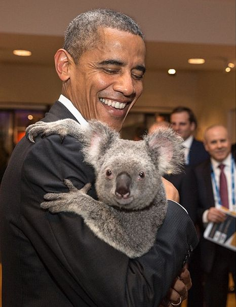 obama_koala.0
