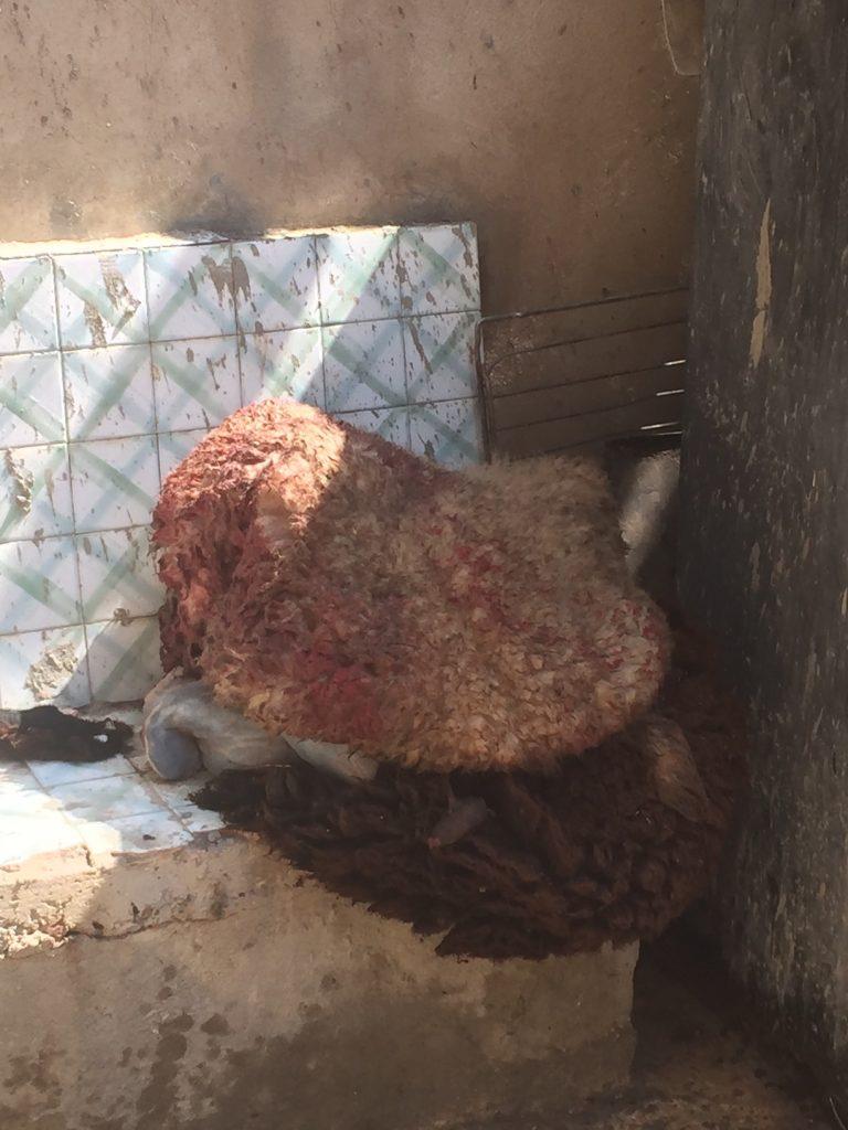 4-sheepskin